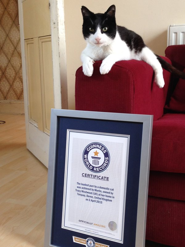 Celebrate National Cat Day With These Record-Setting Felines