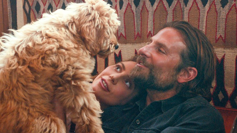 Bradley Cooper on Casting His Own Dog in A Star Is Born: Now He Doesnt Return My Calls