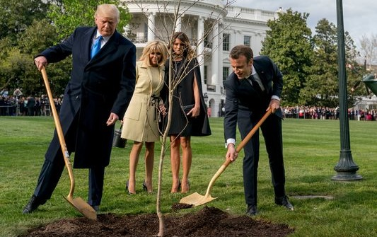 White House mystery: Where is Macron's gifted oak tree?