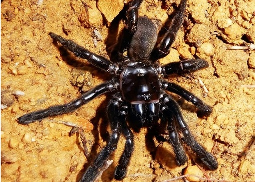Worlds oldest known spider dies at 43 after a quiet life underground
