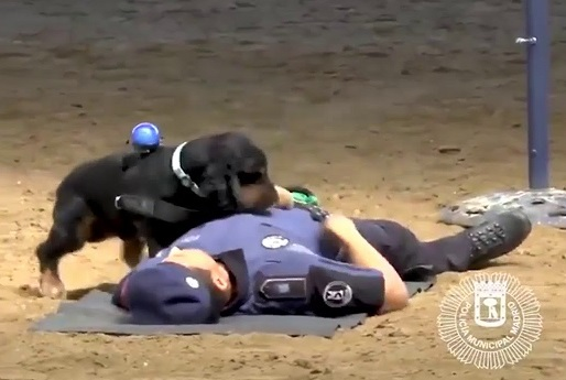 Police dog performs CPR in adorable viral video
