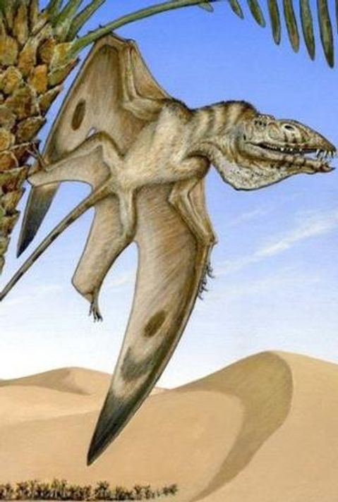 Oldest pterodactyl fossil discovered in Utah desert