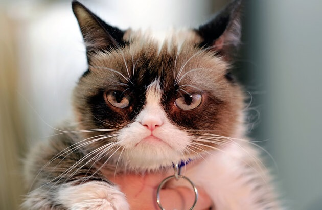 Grumpy Cat Has Died At The Age Of 7