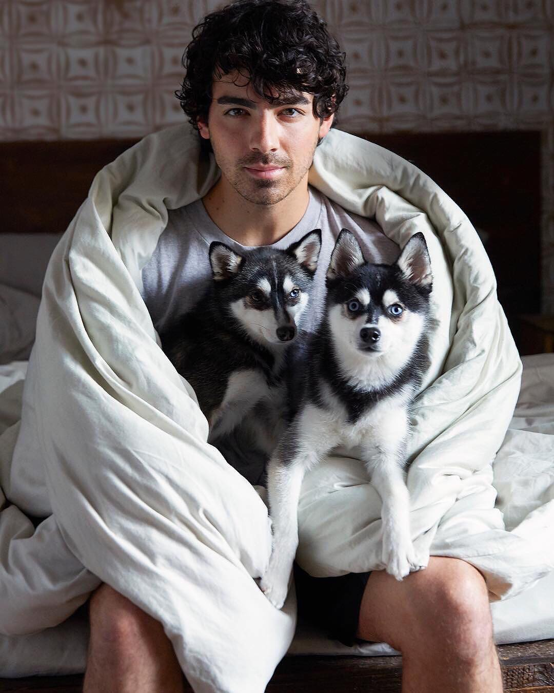 Joe Jonas, Sophie Turner's dog struck, killed by car in New York City
