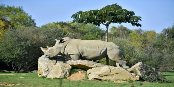 Worlds oldest captive white rhino dies in French zoo