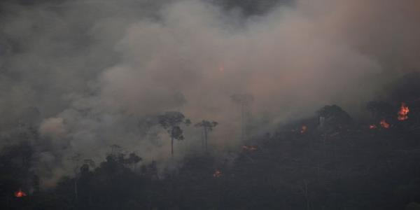 The Amazon Rainforest Is On Fire – Here Are 6 Ways You Can Help