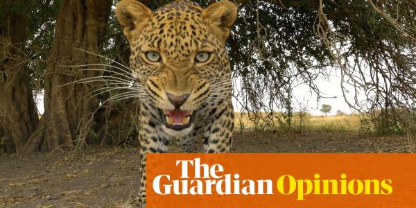 Serengeti is testing our love of wildlife documentaries to the limit | Stuart Heritage