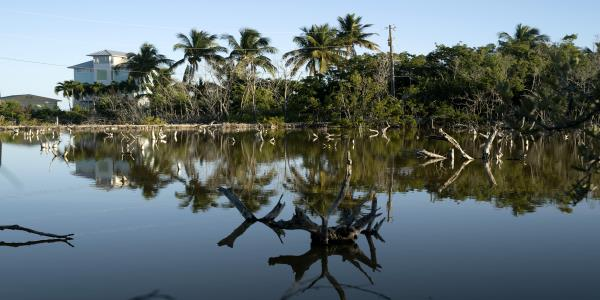 Florida Keys Deliver a Hard Message: As Seas Rise, Some Places Cant Be Saved