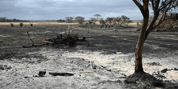 Australias farmers count cost after bushfires wipe out livestock