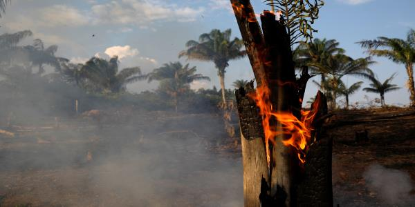 Wildfires: Why Are Fires Causing Devastation Across The World?