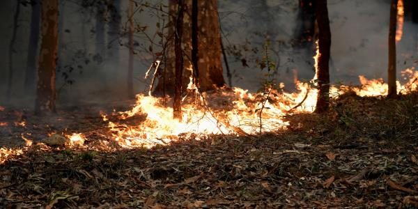 Australian Bushfires Contributing To Pushing Worlds CO2 Levels To New Highs