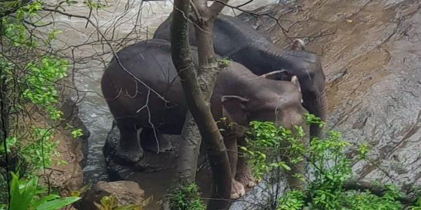 Six elephants die in Thai waterfall while trying to save each other from Hells Abyss