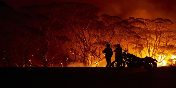 Celebrities Pledge Support for Wildfire Crisis: Australia Update