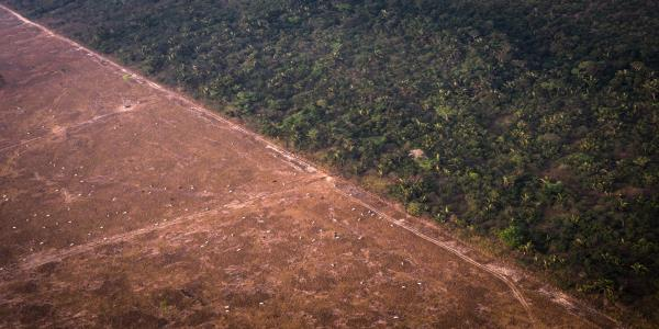 Brazil Admits It Has a Deforestation Problem and Vows to Fix It
